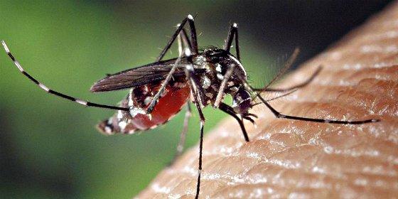 ¿Sabes la razón por la que los mosquitos te pican más a ti que a tu suegra?