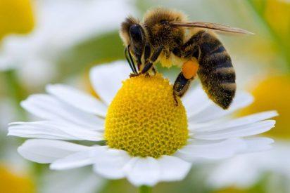 El veneno de abeja contra el envejecimiento de las macizas más famosas del mundo