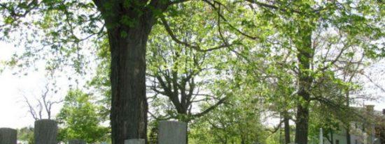 Se hace pasar por un fantasma en el cementerio y le cae un juicio de espanto