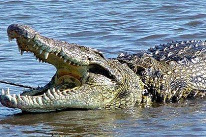 [Vídeo] Un voraz cocodrilo gigante persigue a la carrera a un desesperado bañista