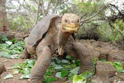 La tortuga gigante 'Pepe, el misionero' fallece por sobrepeso a los casi cien años