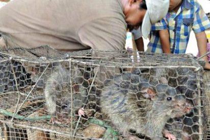El país donde la carne de rata es un gran negocio y una delicia gourmet