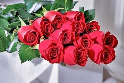 6.000 rosas ecuatorianas para la visita del Papa a Corea del Sur