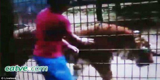 """[Vídeo] Un tigre le arranca un brazo de cuajo a un niño en un zoo: """"¡Voy a morir!"""""""