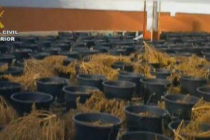 Un exconcejal socialista se pasa de listo y reconvierte una plaza de toros en un invernadero de marihuana
