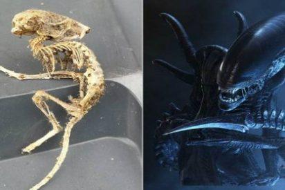 Encuentra el esqueleto de un 'extraterrestre' en el armario de la cocina de su casa