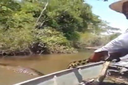 [Vídeo] Atrapa a una anaconda gigante por la cola y le caen 500 € de multa por 'gracioso'