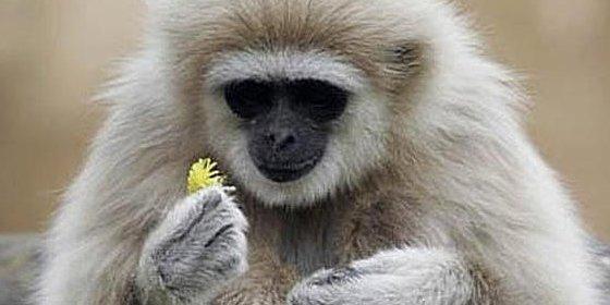 El genoma de un primate podría ayudar a desentrañar el cáncer