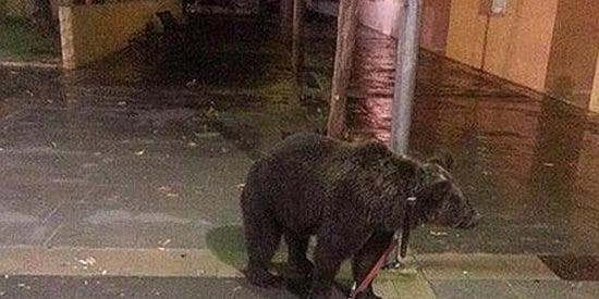 Un domador deja atado un oso a una farola para emborracharse en un bar de Càrcer