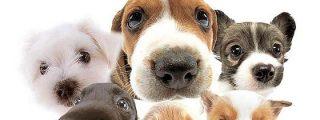 """Los veterinarios destacan la necesidad de vacunar a las mascotas para evitar la """"terrible"""" rabia"""