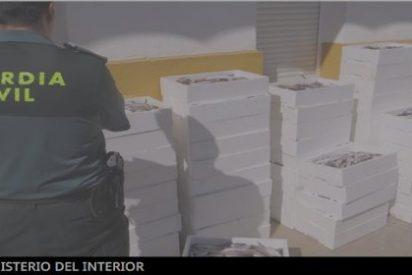 La Guardia Civil intercepta en Monesterio 400 kilos de pescadilla no apta para consumir