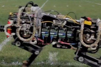 Aplican un algoritmo para que un guepardo robot corra a la velocidad de Usain Bolt
