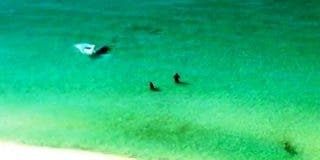 [Vídeo] ¡Salgan del agua rápido, hay un enorme tiburón detrás suyo!
