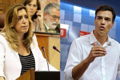 Una crispada Susana Díaz escurre el bulto mientras Pedro Sánchez busca el voto del PSOE en 'Sálvame'