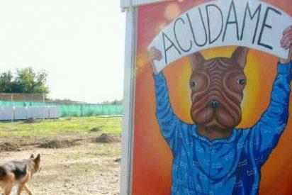 La asociación Acudame organiza un festival solidario en Mérida en favor de los perros abandonados