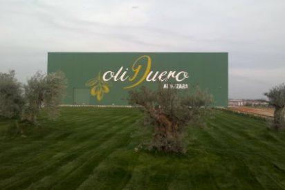 La almazara ecológica de Oliduero (Grupo Matarromera) elaborará uno de los mejores aceites del mundo
