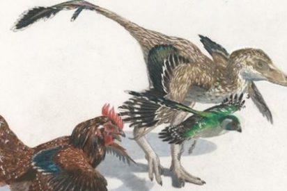 Un estudio sobre los huesos de la muñeca desvela cómo las aves evolucionaron de los dinosaurios