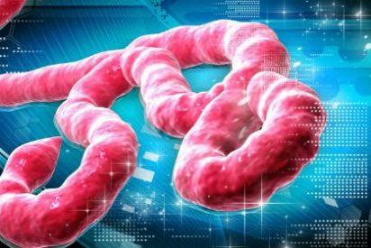 Los expertos pronostican que el ébola aparecerá en Francia sin remedio a finales de octubre