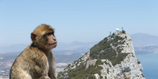 La 'cepa británica' del coronavirus ya está en la Península Ibérica: Reino Unido detecta casos en Gibraltar