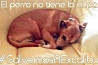 La increíble y triste historia de un perro llamado Excalibur