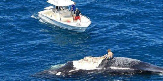 [Vídeo] Se sube a una ballena haciendo el merluzo y acaba rodeado de voraces tiburones