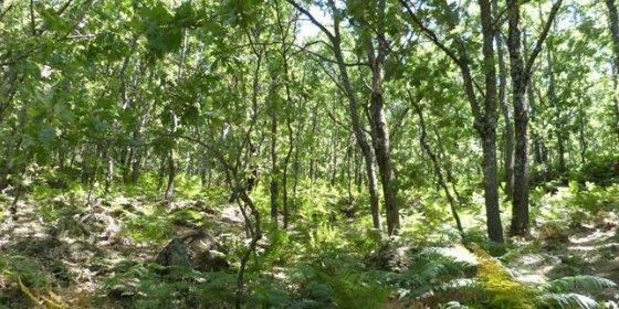 Los bosques pierden sorprendentes cantidades de nitrógeno