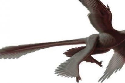 El colorido de sus plumas ayudó a que algunos dinosaurios volasen antes que las aves
