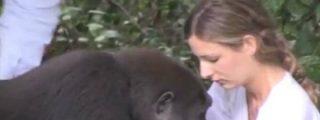 El emocionante reencuentro de una joven con los gorilas con los que compartió infancia