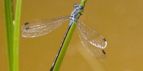 Los científicos encuentran la respuesta a un enigma evolutivo de un siglo: las alas de los insectos