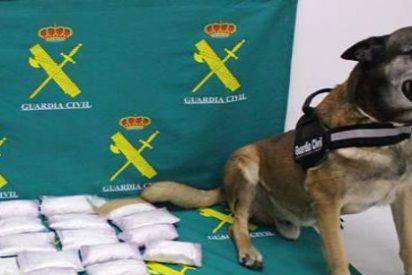 El perro 'Barry' encuentra 6,5 kilos de cocaína ocultos en un doble fondo