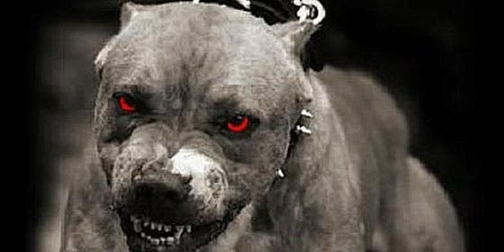 Dos pitbull devoran el cadáver de su dueño al quedarse encerrados en una caravana
