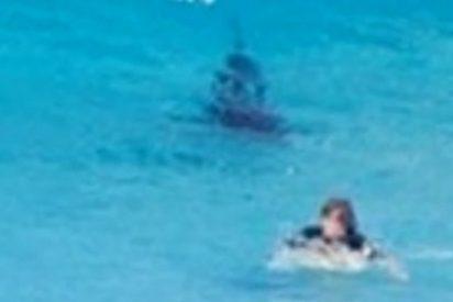 El terrorífico encuentro de un 'tranquilo' surfista con un enorme tiburón blanco