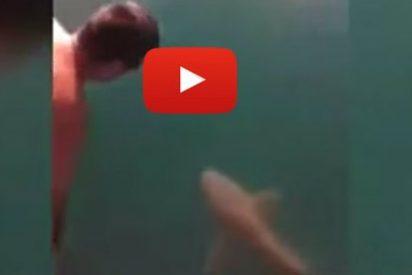 El vídeo del descerebrado que salta encima de un tiburón tigre