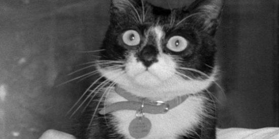 La Marina británica homenajea al gato Simon por su mano con las ratas y salvar vidas