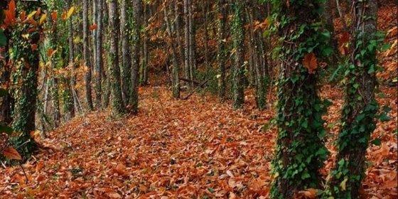 El Valle del Ambroz celebrará un raid de aventura nacional por 'El otoño mágico'