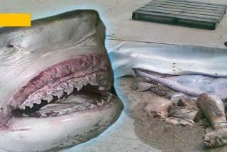 La pesca del tiburón tigre que llevaba en su interior... ¡una cabeza humana!