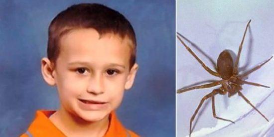 Muere un niño de 5 años tras ser picado por una araña que estaba en su pijama