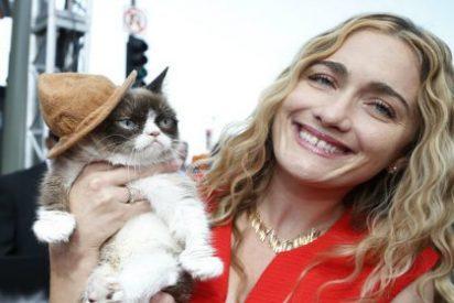 Esta gata con cara de malas pulgas le ha hecho ganar 80 millones de euros