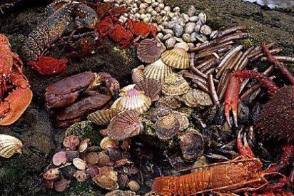 Galicia, una tierra que abre el apetito cuando se acerca la Navidad