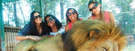 Al zoo que deja entrar en la jaula de los leones a los visitantes se lo van a comer vivo