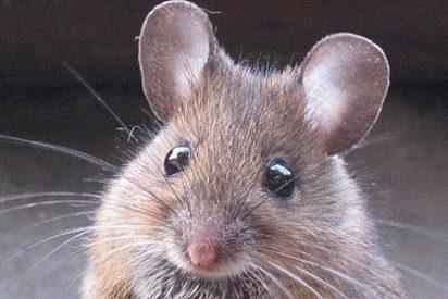 Un ratón en la cabina provoca un retraso aéreo de bigotes en un vuelo Madrid-Doha