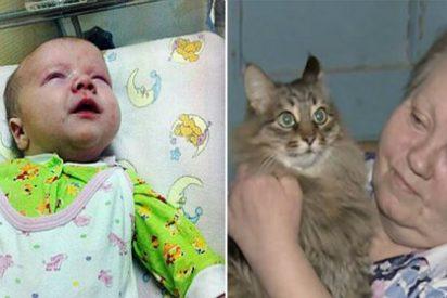 La gata que ha salvado a un bebé abandonado de morir congelado no tiene dueño