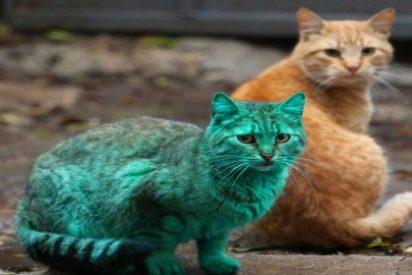 [Vídeo] La misteriosa gata verde de Bulgaria está vivita y coleando... ¡y embarazada!