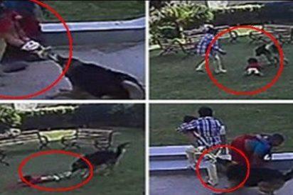 El vídeo del niño que salva a su hermana pequeña del feroz ataque de un perro en el parque
