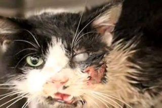 El vídeo del 'gato zombi' que escapó de su tumba dando un susto de muerte