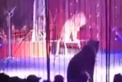 [Vídeo] El feroz ataque de un león a la domadora bailarina ante su despavorido público