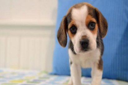 Melendi y Julia aumentan la familia con su nuevo perrito