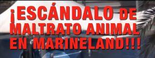 El indignante vídeo del maltrato a los delfines en Marineland Mallorca