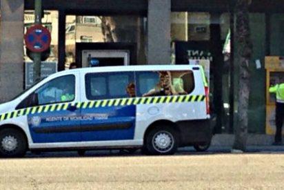 Agentes de movilidad: aparcados en el carril bus y sacando dinero del cajero