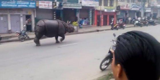 [Vídeo] Un rinoceronte entra en un hospital y mata a una mujer a cornadas